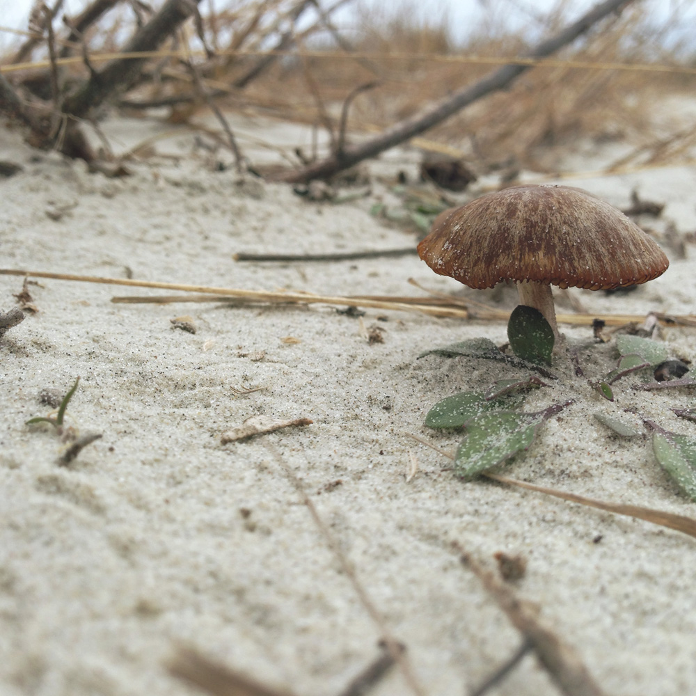 sapelo island - cabretta beach - 2016 - 126
